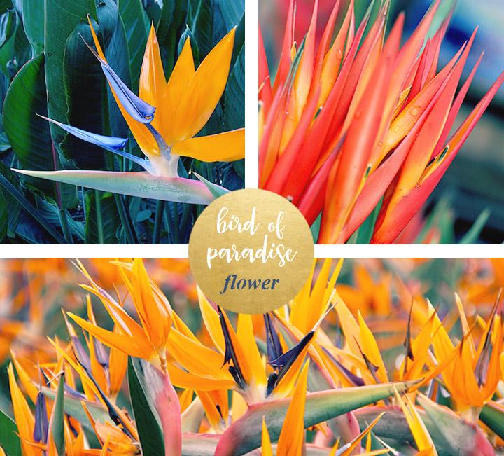 flower-meanings-birdofparadise1